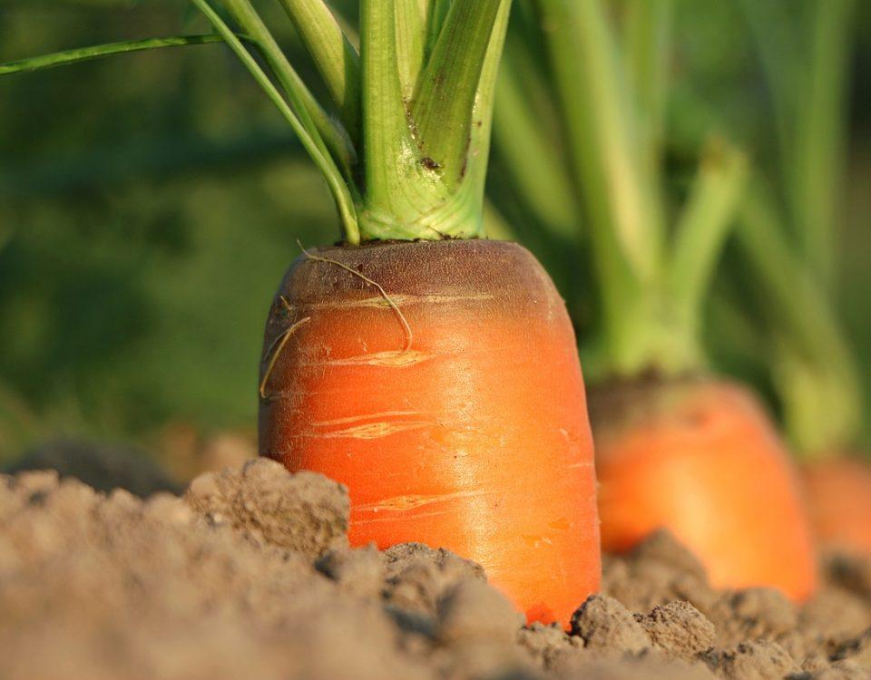 crear fertilizantes e insecticidas naturales