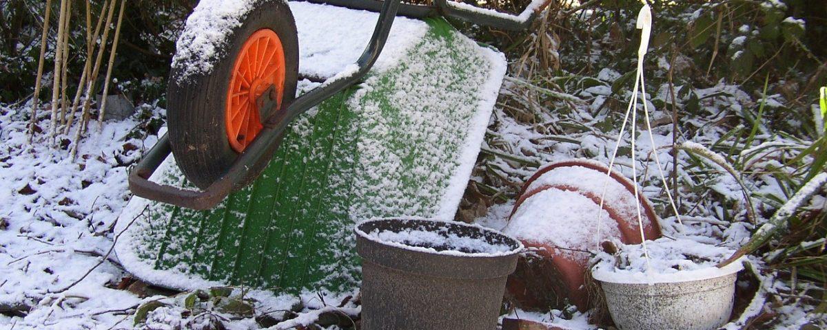 jardín en enero