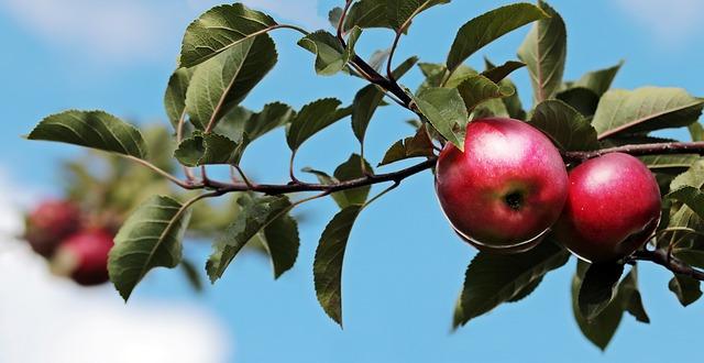 árbol frutal manzano