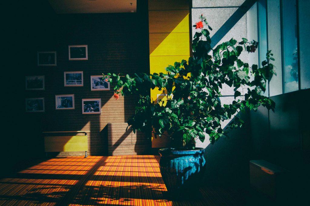 Planta de interior