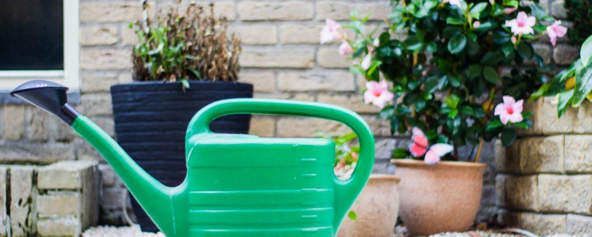 Como saber si una planta necesita riego