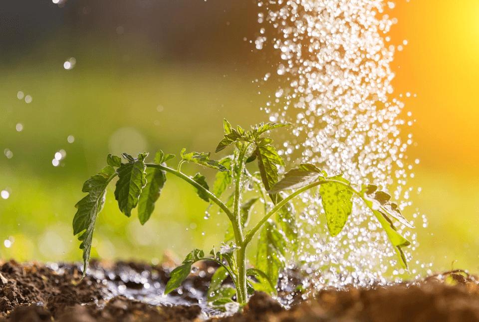 ahorrar agua riego hozelock