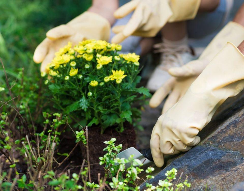 beneficios de las plantas y del cuidado del jardin