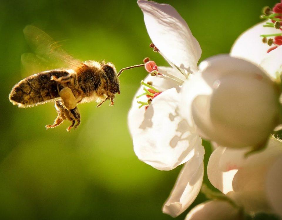 abejas en el jardin