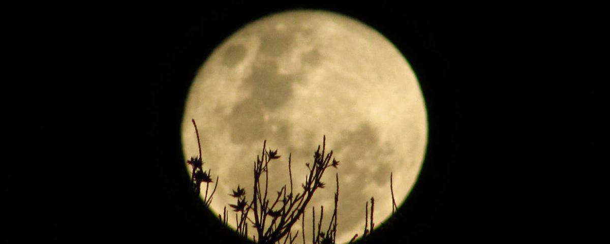 Como influye la luna en las plantas